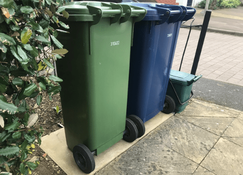 Rats-out-of-bin-clean-bins