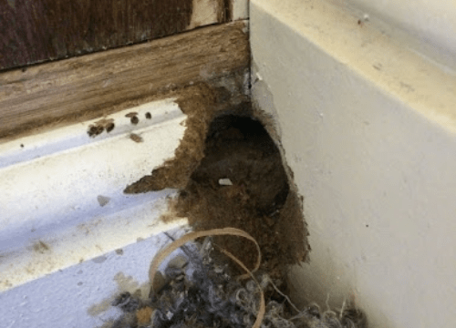 Rats-out-of-bin-structural-damage